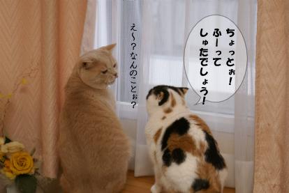 あたちの小さいお耳にぃ!.jpg