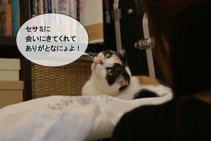 ありがとなにょよ!.jpg