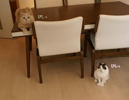 ハイチーズ!.jpg