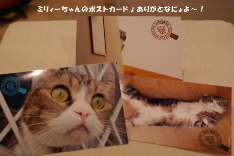 ミリィーちゃん.jpg