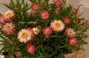 いるちゃん、かわいいお花にしました。ありがとう。.jpg